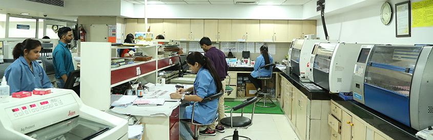 histopathology & cytopathology sections