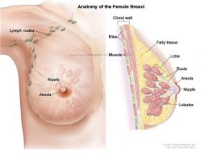Breast Cancer Screening Advisory